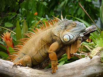 Tips on Making Your Dreams Come True - Iguana Dreams